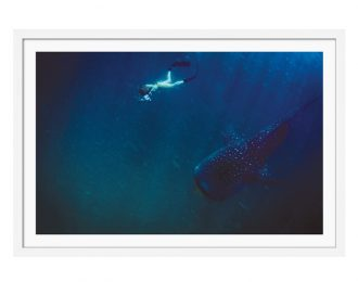 Whale Shark Filming