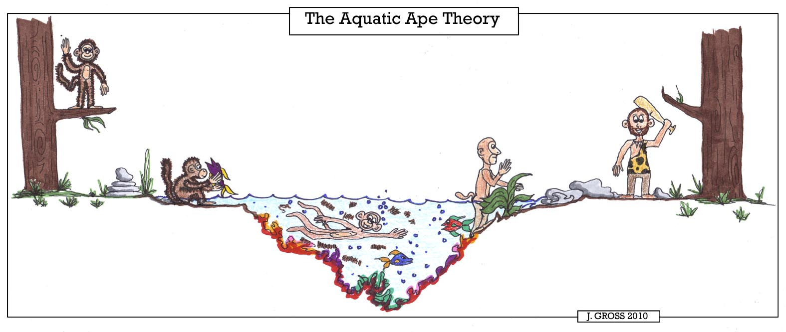 an analysis of the topic of the aquatic ape theory