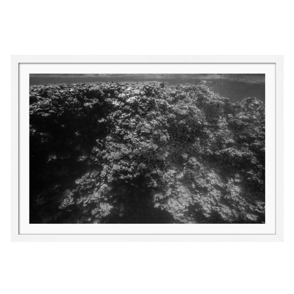 Shadows of a Coral Wall - Framed Underwater Photography