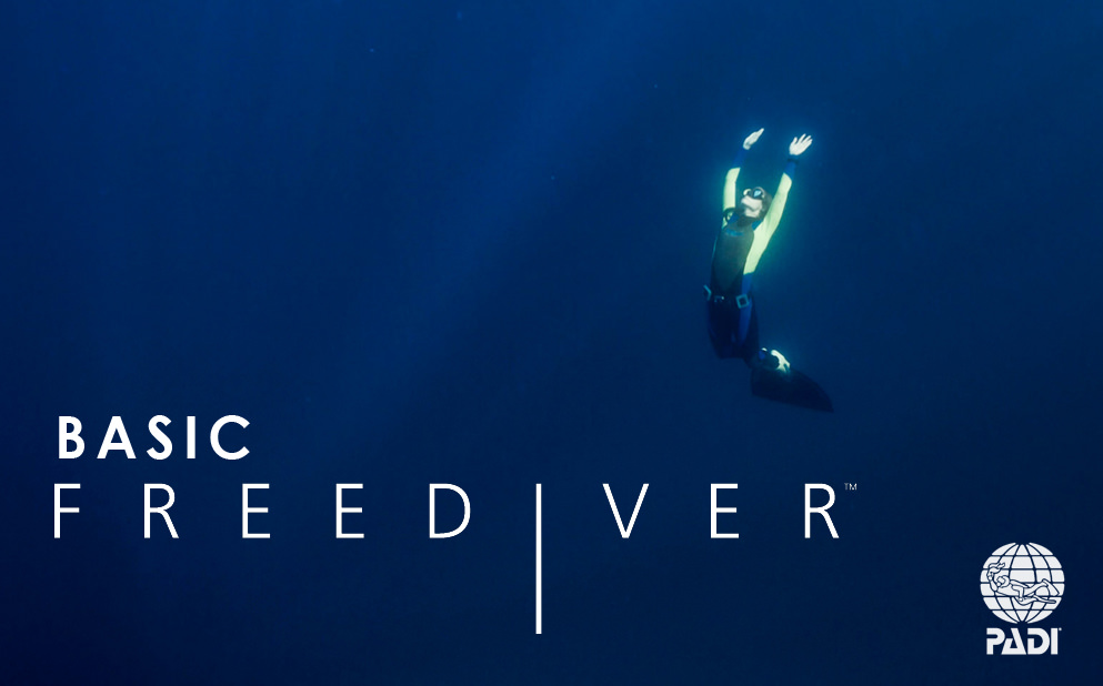 padi-freediver-course